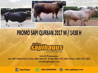 cover Daftar Harga Sapi  Qurban 2017