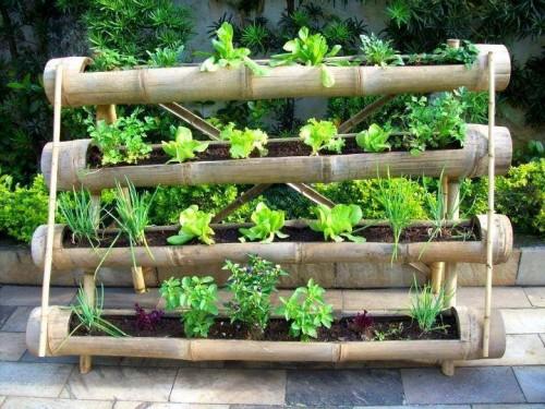 Foto tips menanam sayuran dipekarangan rumah