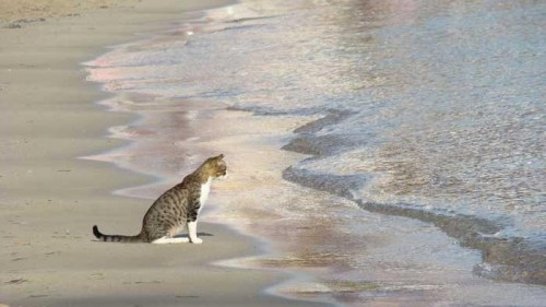 cover Penyebab Kucing Takut Air Dan meninggal keadaan bersembuyi
