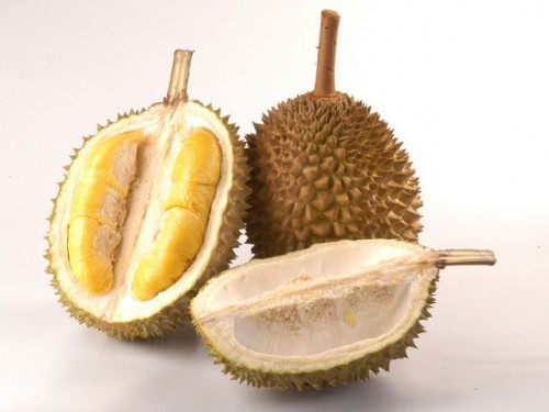 cover Tentang DURIAN