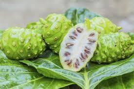 cover Khasiat dan manfaat buah mengkudu untuk mengatasi hipertensi