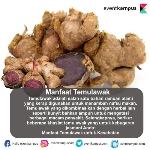 cover Manfaat Temulawak
