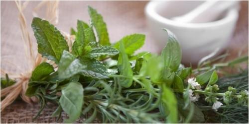 cover 4 Tanaman Herbal Hebat Cegah Kanker