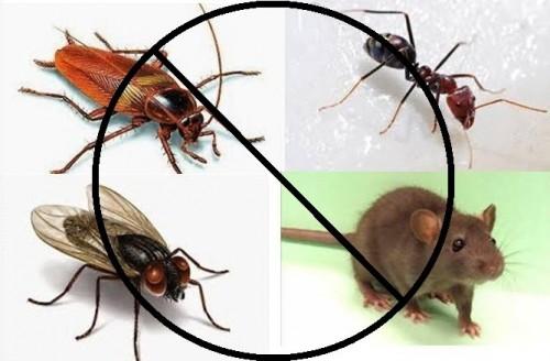 cover cara ampuh mengusir serangga di rumah