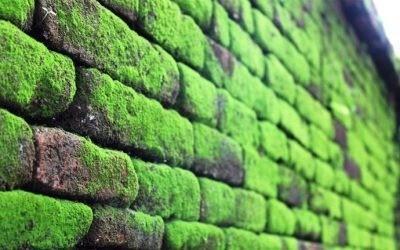 cover Cara Mudah Dan Ampuh Mengatasi Lumut Di Tembok