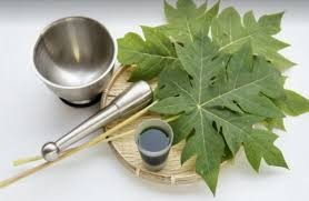 Foto manfaat dari daun pepaya
